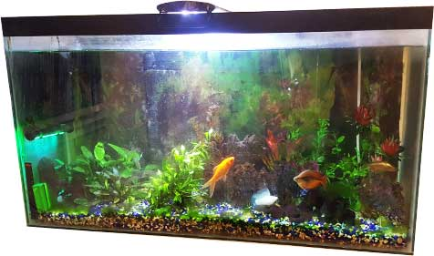 Setting up a Freshwater Fish Tank