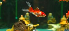 How to Cycle an Aquarium a Beginners Guide
