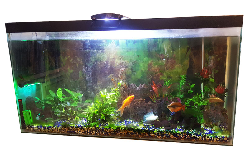 how to cycle an aquarium