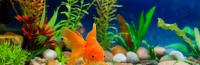 Taking Care of Goldfish