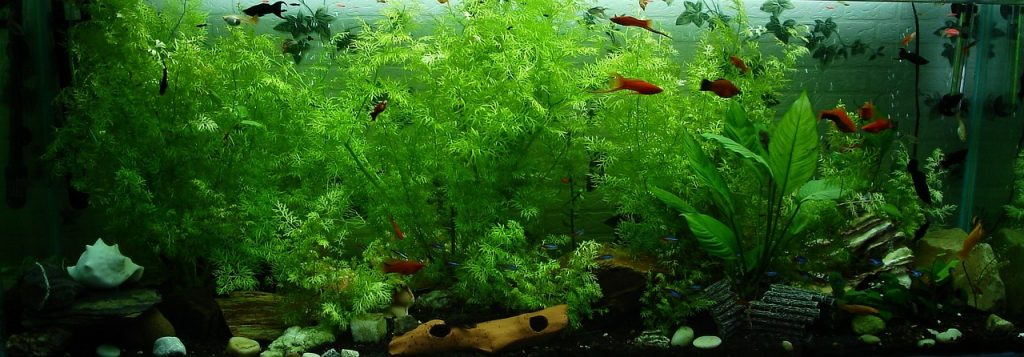basic aquarium knowledge large fish tank