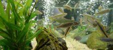 Basic Aquarium Knowledge Happy Fish