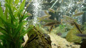Basic Aquarium Knowledge