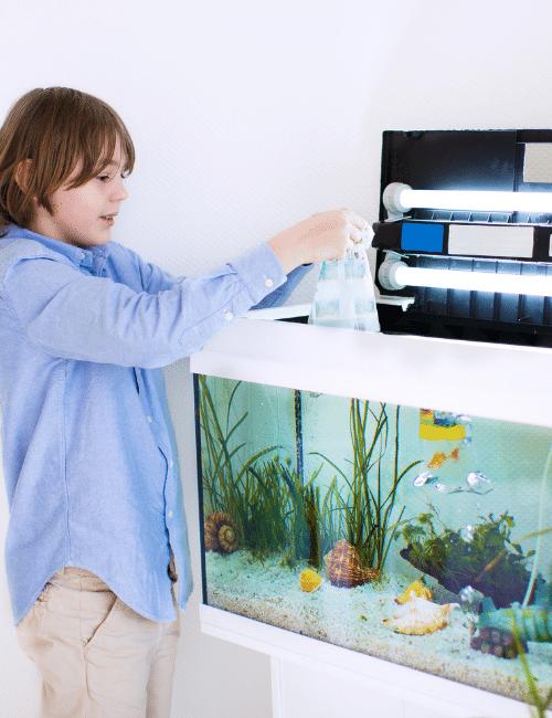 placing fish into aquarium
