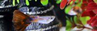 Types of aquarium lighting to illuminate fish tanks
