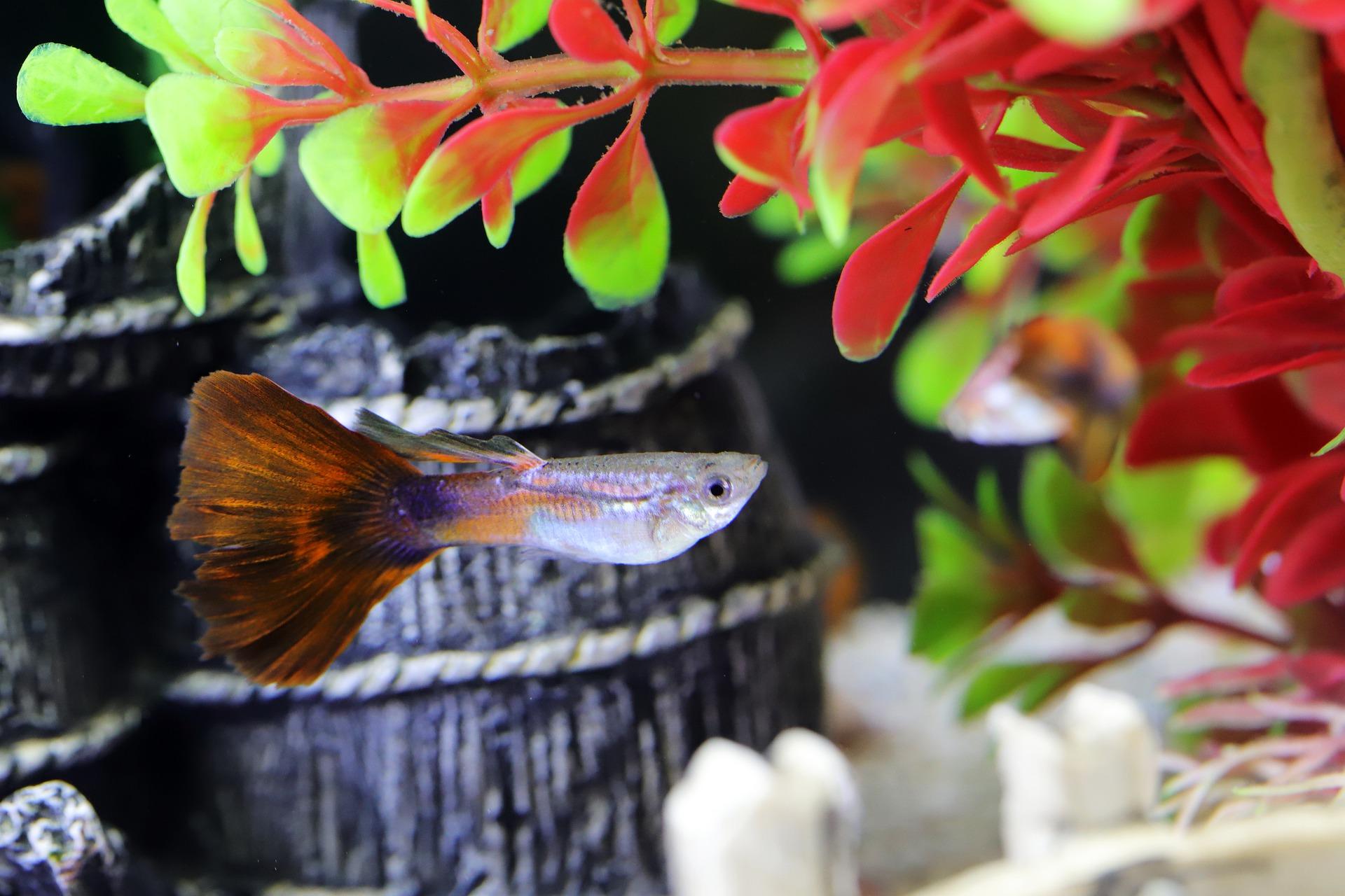 Read more about the article Types of aquarium lighting to illuminate fish tanks