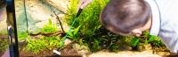 Aquarium Maintenance Tools Tips and Tricks