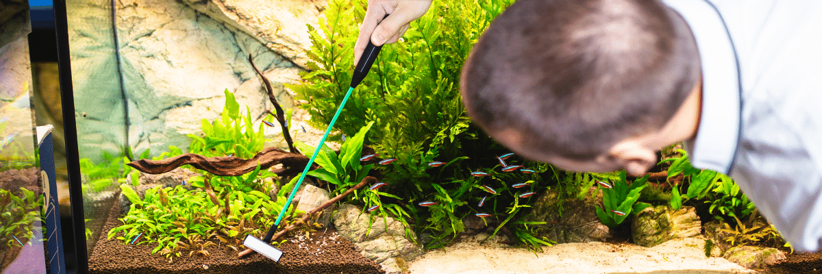Read more about the article Aquarium Maintenance Tools Tips and Tricks