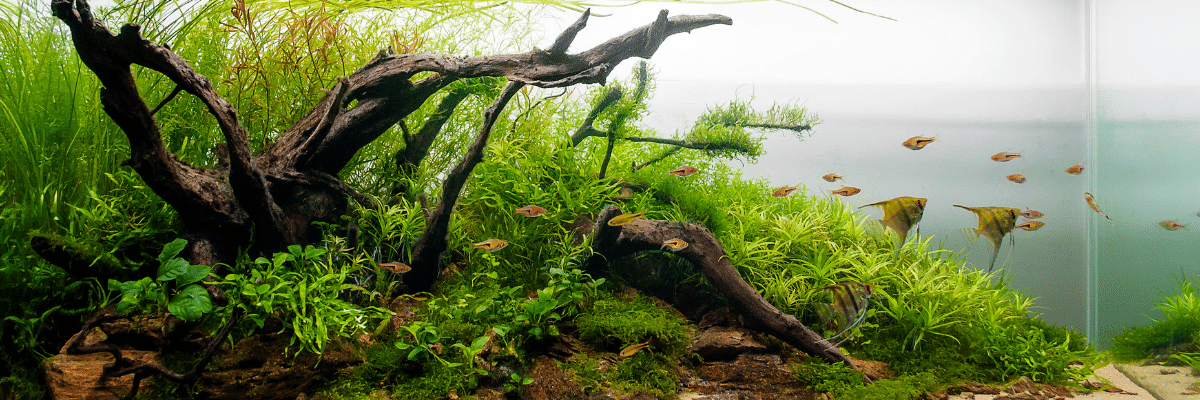Read more about the article Aquascaping Tools For Aquarium