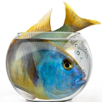 15 Common Aquarium Mistakes and How to Avoid Them small fish tank