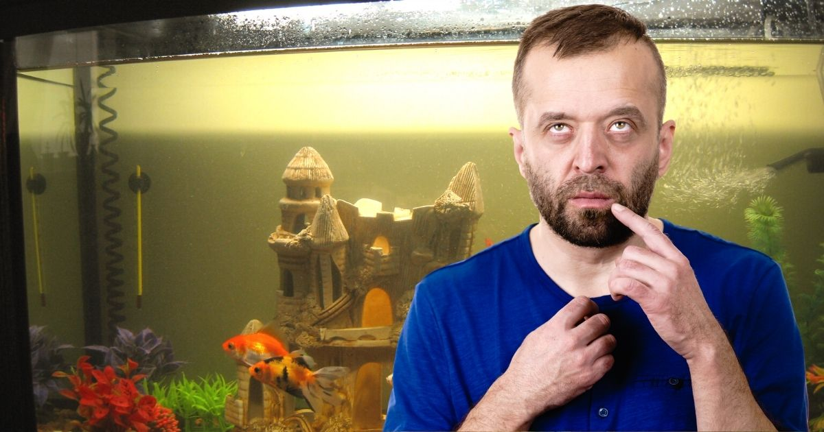 15 Common Aquarium Mistakes and How to Avoid Them: Guidelines for Beginners