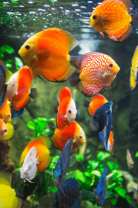 Keeping Fish in an Aquarium