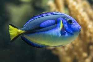 Blue tang fish how to set up a saltwater fish tank