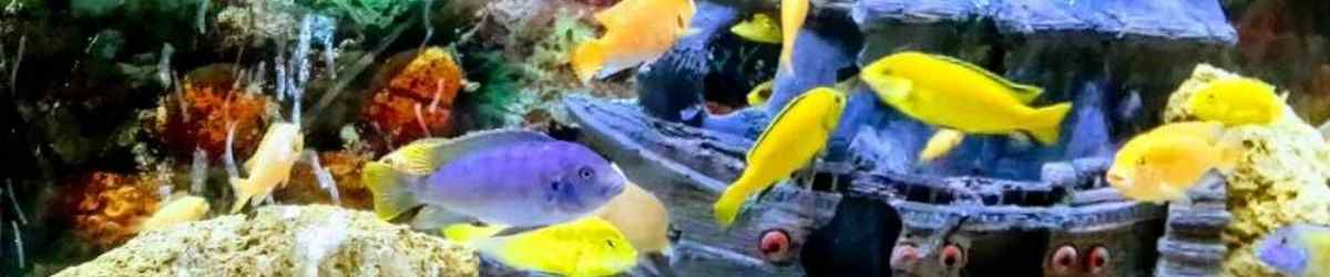 Read more about the article How to Clean Aquarium Decorations