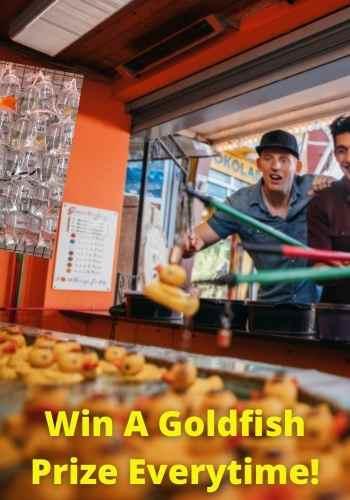 fairground win a goldfish