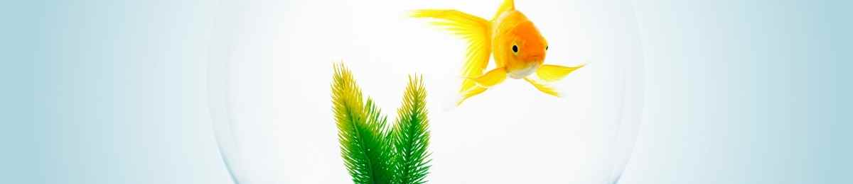 Read more about the article Keeping Goldfish in a Bowl is it a Good Idea?