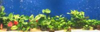 How to Choose The Best Aquarium Filter for Your Fish Tank