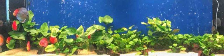 How to choose the best aquarium filter